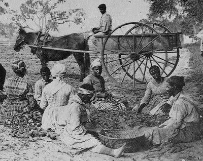 Edisto Island, South Carolina, 1862.